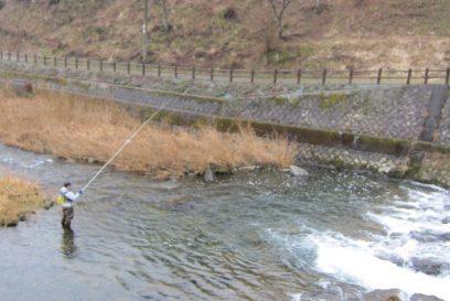 長谷漁協組合よりアマゴの放流についてのお知らせ